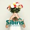 Доставка цветов в Красноярске | Sibiris