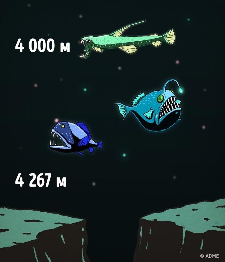 Про глубину, и то, что в ней находится