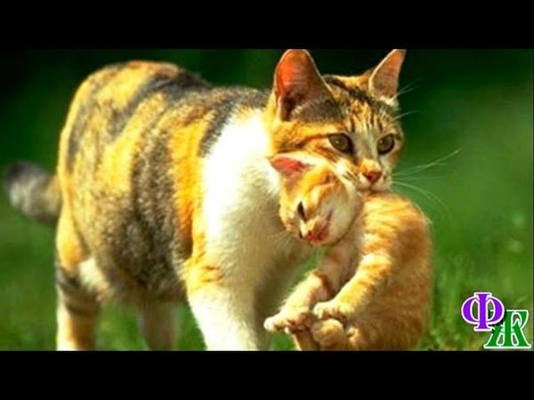 Не надо было есть это мясо Адская боль в животе КОШКА понимала всё и спешила отдать котят людям