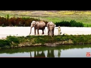 Интервью Олега Зубкова обо всём  на фоне гуляющих слонов! Часть первая.